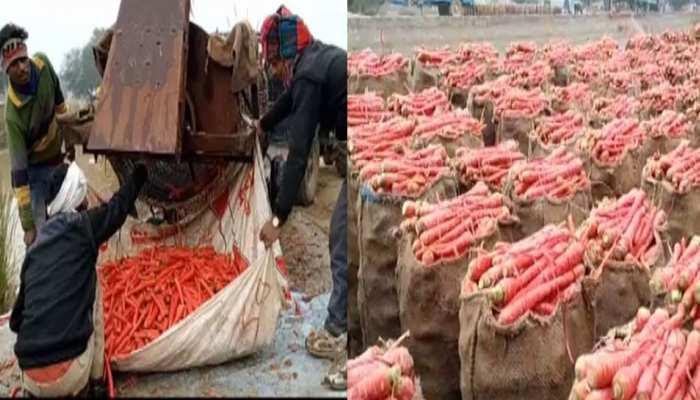 बीकानेर के इस गांव को गाजर ने दिलाई नई पहचान, किसानों ने किया कुछ ऐसा...