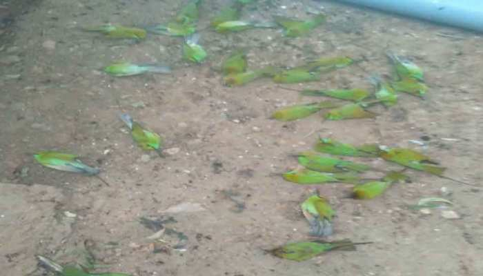 MP: ठंड के प्रकोप से आफत में पक्षियों की जान, दतिया में 35 चिड़ियों की मौत