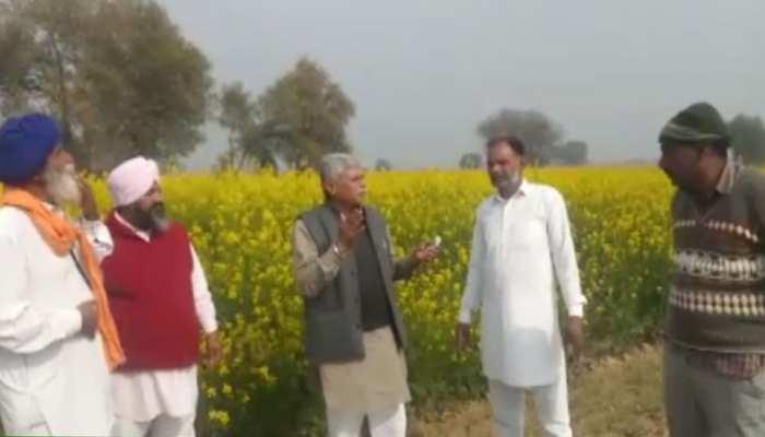 श्रीगंगानगर: टिड्डी दल का आतंक जारी, फसलें बर्बाद होने के डर से सहमे किसान