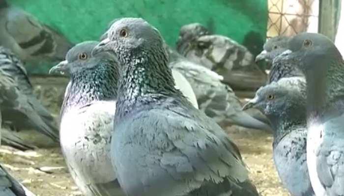 जयपुर: मंकर संक्रांति में परिदों पर कहर बनकर टूटी पतंगबाजी, सैंकड़ों पक्षी घायल
