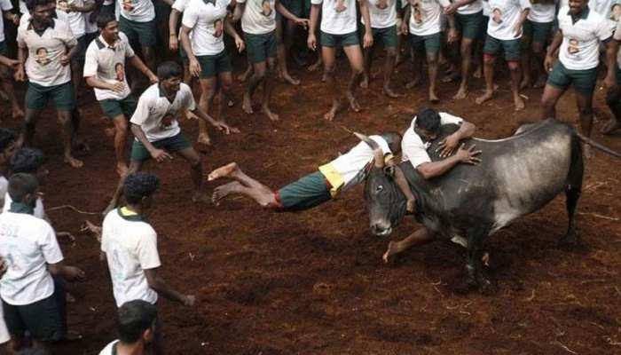 तमिलनाडु में जलिकट्टू खेल का आयोजन, अब तक इतने लोगों की हुई मौत