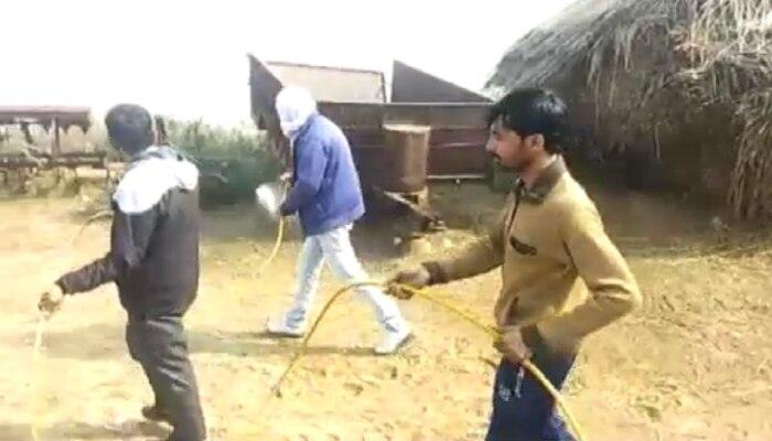 चूरू: जानवरों का खतरनाक रोग इंसान में, पूरे गांव में सर्वे और छिड़काव