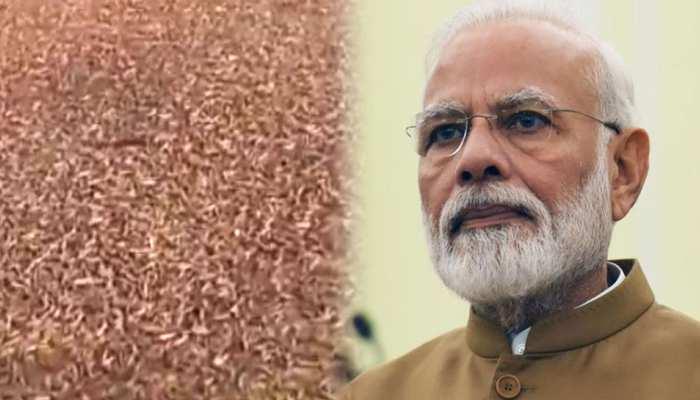 टिड्डी हमले को राष्ट्रीय प्राकृतिक आपदा घोषित करने की मांग, राजस्व मंत्री ने PM को लिखा पत्र