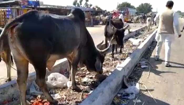 जालोर: बाजार में धड़ल्ले से हो रहा प्लास्टिक का प्रयोग, कई गाय हो चुकी हैं शिकार