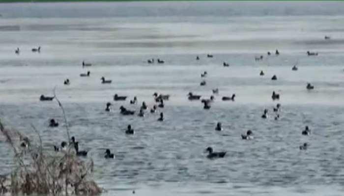 डूंगरपुर बर्ड फेयर 2020 का दूसरा दिन आज, रणसागर तालाब पर हुई परिदों की वॉचिंग