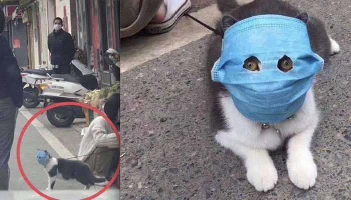कोरोना वायरस की वजह से आई पालतू जानवरों की आफत, तस्वीरें देखकर नहीं रोक पाएंगे हंसी