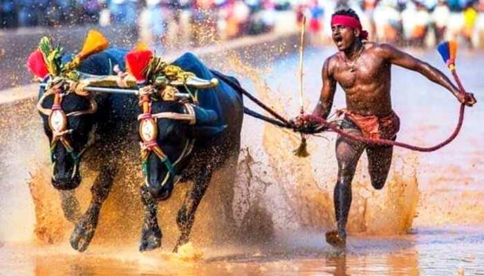 भैंसा दौड़ में रिकॉर्ड बनाने वाले इंडियन 'उसैन बोल्ट' को तराशेगा साई, कोच लेंगे टेस्ट