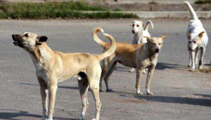 उदयपुर में आवारा कुत्तों का आतंक, रोज कई लोग हो रहे शिकार