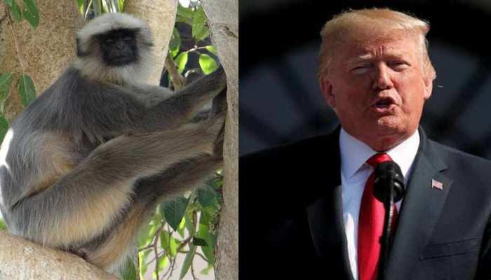 यूपी: अमेरिकी राष्ट्रपति ट्रंप की सुरक्षा में ताजमहल के अंदर लंगूर भी रहेंगे तैनात