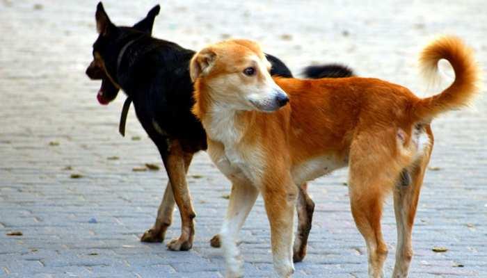 जनता को कुत्तों से बचाने के लिए इस पंचायत ने सुनाया अनोखा फरमान, हंस-हंसकर हो जाएंगे बेहाल