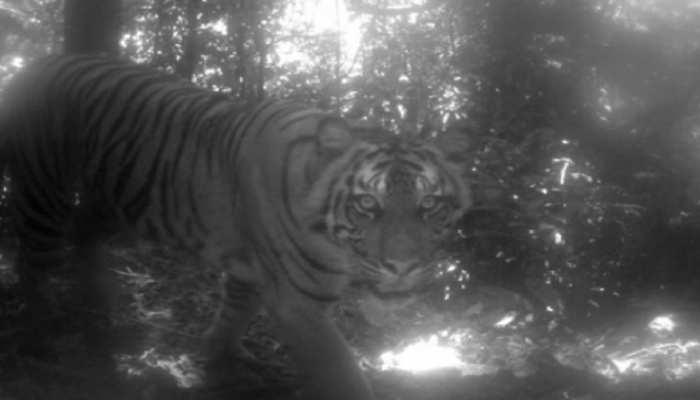 बिहार: कैमूर वन्यप्राणी आश्रयणी क्षेत्र बनेगा टाइगर रिजर्व
