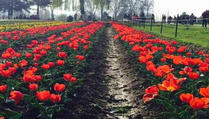 श्रीनगर: मार्च में पर्यटकों के लिए खुलेगा एशिया का सबसे बड़ा ट्यूलिप गार्डन, जानें इस बार क्या है खास?