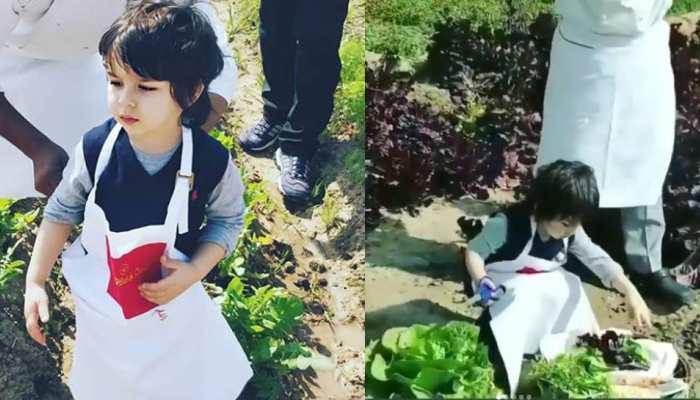 Entertainment News: हाथ में कैंची पकड़े तैमूर ने की सब्जियों की कटाई, जमकर वायरल हो रहा VIDEO