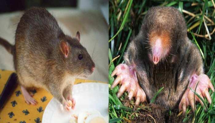 चूहा और छछूंदर पकड़ रहे सरकारी ऑफिसर, यूपी सरकार का अजब गजब आदेश
