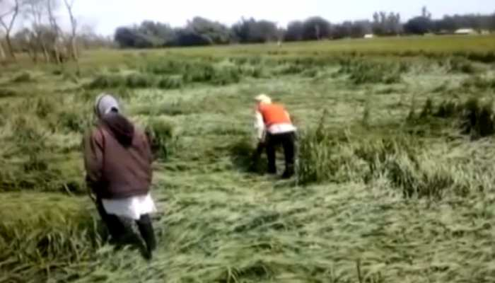 मौसम की बेरुखी किसानों पर पड़ रही है भारी, सरकारी मदद की आस में लगाए बैठे हैं टकटकी