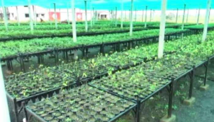 पाकुड़ में पर्यावरण विभाग की शानदार पहल, 5 रुपए में बेच रही पौधे, बनाई गई हाईटेक नर्सरी