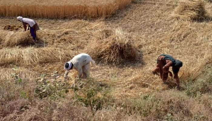 राजस्थान: गहलोत सरकार का किसानों के लिए निर्देश, फसल की कटाई में इन नियमों को मानें