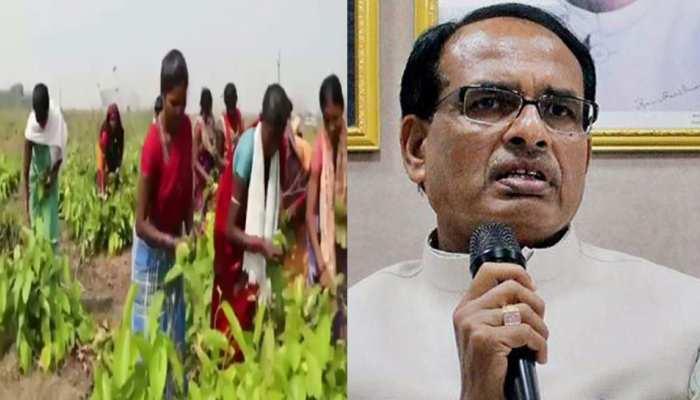 MP में 25 अप्रैल से होगी वनोपज की खरीद, महुआ का मूल्य 35 रु./ किलो, तेंदूपत्ता 2500 रु. प्रति बोरा