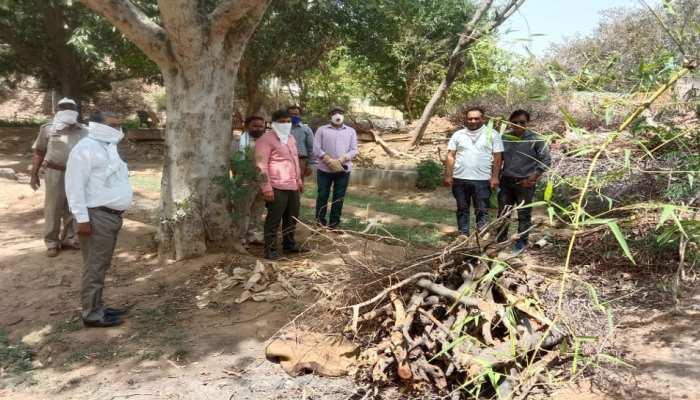 जयपुर: खाने की तलाश में सड़क पर आया पैंथर, अज्ञात वाहन ने मारी टक्कर