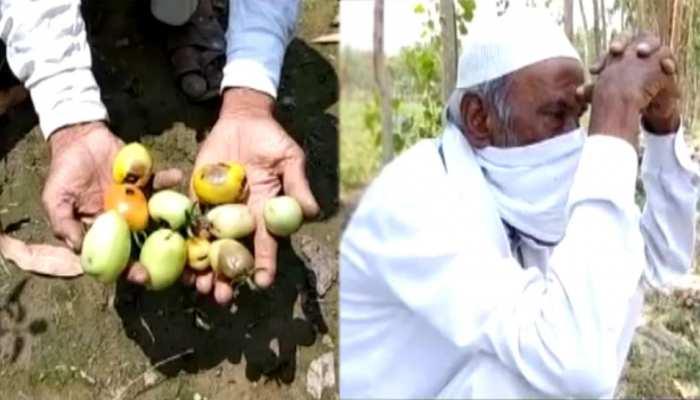 सब्ज़ियों और फलों की बंपर पैदावार, फिर भी किसानों के चेहरों पर छायी मायूसी