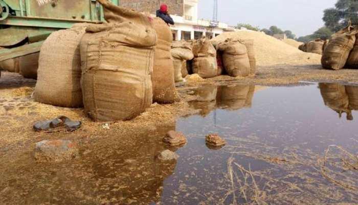 श्रीगंगानगर: मंडी समिति की व्यवस्था फेल, बारिश में भीग रहा करोड़ों का गेहूं