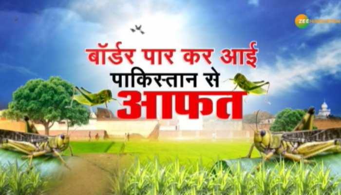 भारत में टिड्डियों का खतरा बढ़ा, कृषि मंत्रालय ने पाकिस्तान को सुनाई 'खरी-खोटी'