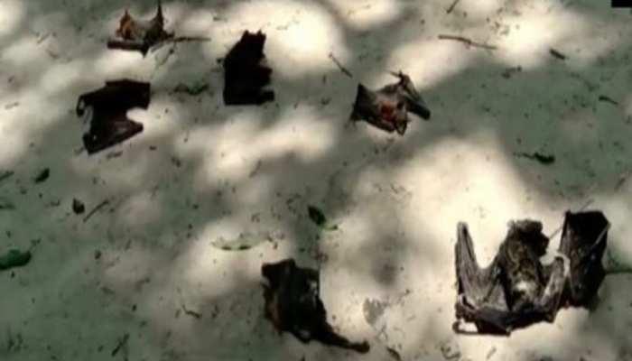 गोरखपुर के बाद अब बलिया में चमगादड़ों की मौत से दहशत, जिला प्रशासन ने जताई ये आशंका