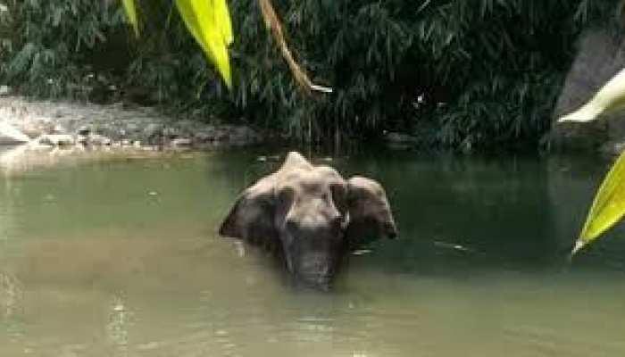 केरल में गर्भवती हथिनी की हत्या का विरोध तेज, उज्जैन में महावत ने बाबा महाकाल से मांगी ऐसी मन्नत
