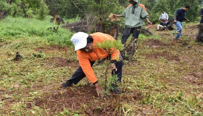 बिहार में राज्यव्यापी चलाया जाएगा पौधारोपण कार्यक्रम, लगाए जाएंगे 28 लाख पौधे