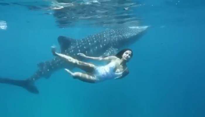 Viral Video: जब समंदर में बड़ी मछली के साथ तैरती नजर आईं Katrina Kaif