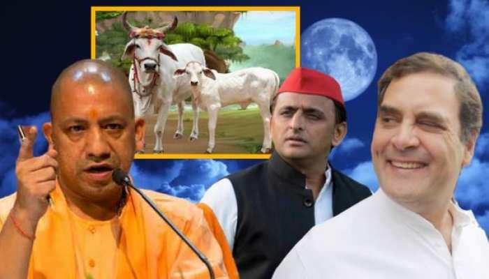 CM योगी ने गो-हत्या के खिलाफ कानून बनाया, तो कांग्रेस और सपा को लग गई मिर्ची
