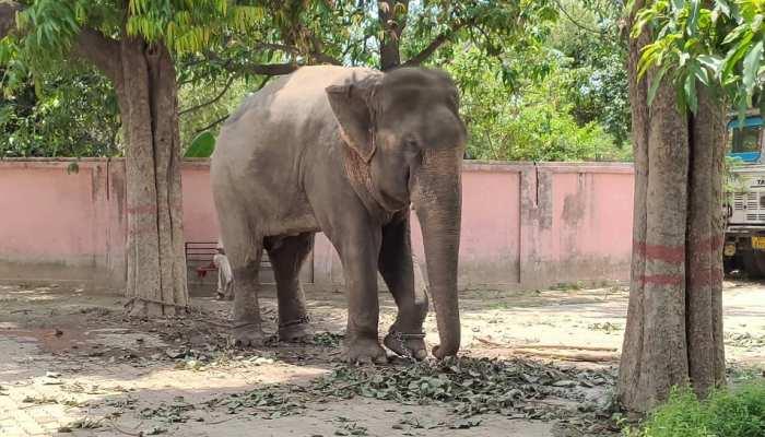 वाराणसी में एक हाथी पर दर्ज है कत्ल का केस, 10 महीनों से कर रहा रिहाई का इंतजार