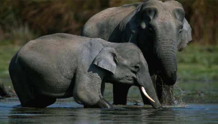 सूरजपुर: प्रशासनिक अधिकारियों की लापरवाही से उग्र हुआ हाथियों का दल, एक युवक की ले ली जान