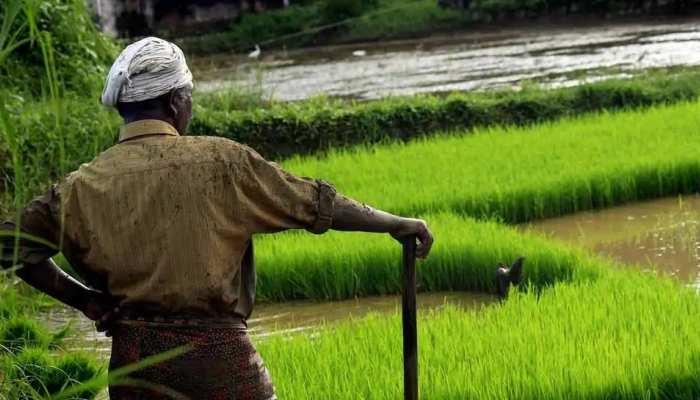 शाजापुर: केसीसी से ऋण नहीं मिलने से किसान परेशान, धान की रोपाई पर भी छाया संकट