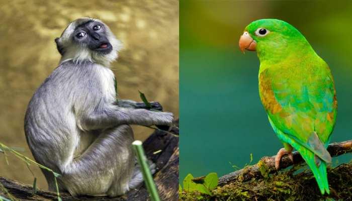 यहां तोता और लंगूर पालने पर लगी पाबंदी, 3 साल जेल के साथ देना पड़ेगा जुर्माना