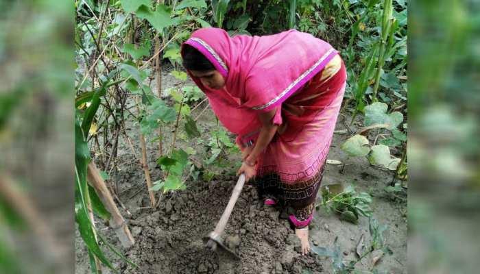 बिहार: पश्चिम चंपारण में हरित बिहार कार्यक्रम की शुरुआत, जीविका दीदियों ने संभाली कमान