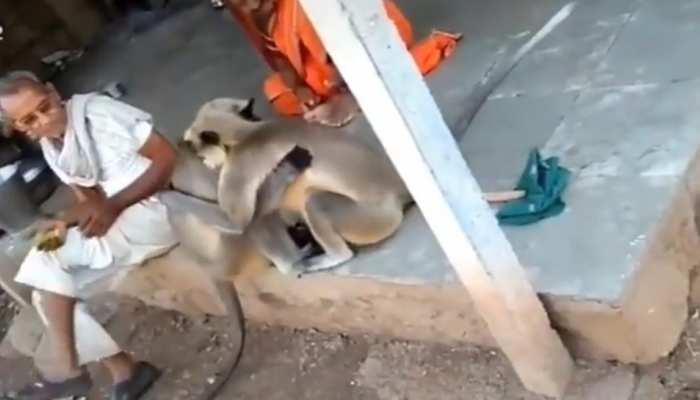 VIDEO: लंगूरों ने एक-दूसरे को ऐसे लगाया गले, वीरेंद्र सहवाग भी हुए हैरान, बोले- 'क्या गले मिले'
