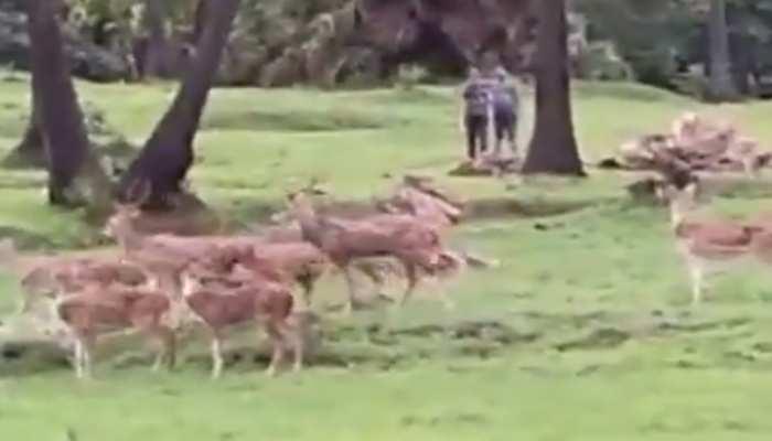 कोरोना काल में मुंबई की इस नदी के किनारे दिखा हिरणों का झुंड, क्या देखा आपने Viral Video