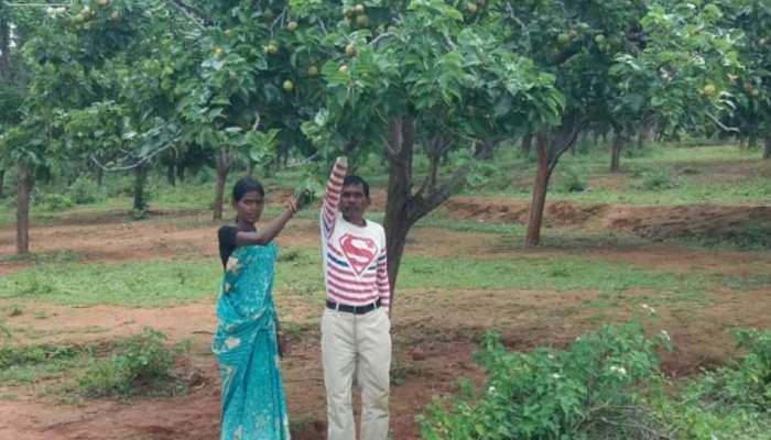 झारखंड : किसानों के आय का साधन बनी नेतरहाट में नाशपाती की खेती