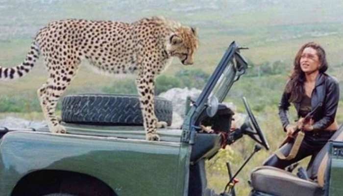 जब करिश्मा कपूर की गाड़ी पर आकर बैठा चीता, Viral हो रही ये PHOTO