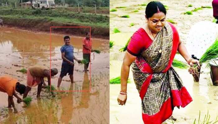 खेतों में धान की रोपाई करते दिखे छत्तीसगढ़ के ये नेता, सोशल मीडिया में जमकर हो रही तारीफ