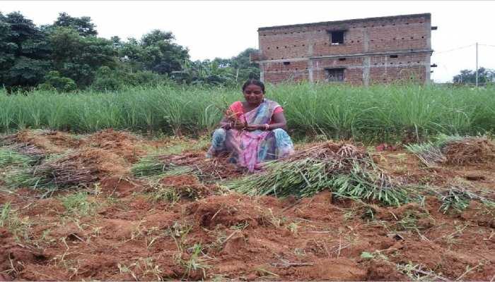 झारखंड: लेमन ग्रास से आत्मनिर्भरता का पाठ पढ़ा रही ग्रामीण महिलाएं, PM ने भी की तारीफ