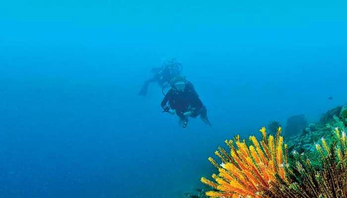 Diving के दौरान पिता की टूटी गर्दन, नौ साल के बेटे ने ऐसे बचाई जान