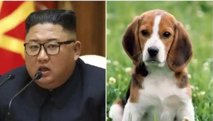 कोरोना काल में कुत्तों पर बरपा किम जोंग का कहर, दिया खाने के आदेश; जानिए वजह