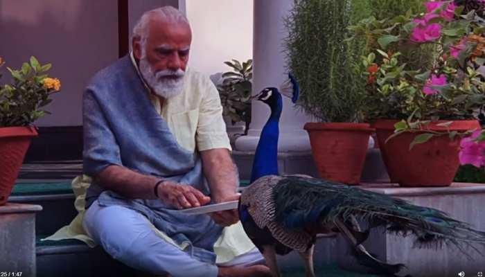 पीएम मोदी की मोर के साथ है खास दोस्ती, दाना चुगाते हुए शेयर किया वीडियो