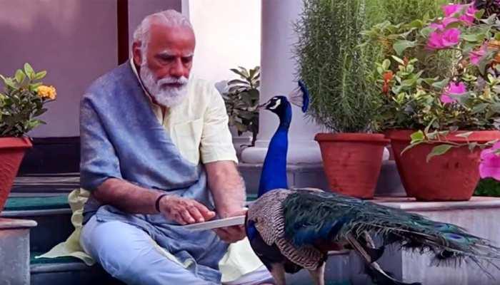 प्रधानमंत्री निवास पर मोर को दाना खिलाते दिखे PM Modi, वीडियो किया शेयर