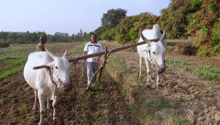 डूंगरपुर: PMKSY का दायरा घटने से किसान चिंतित, मोदी सरकार से की यह मांग...