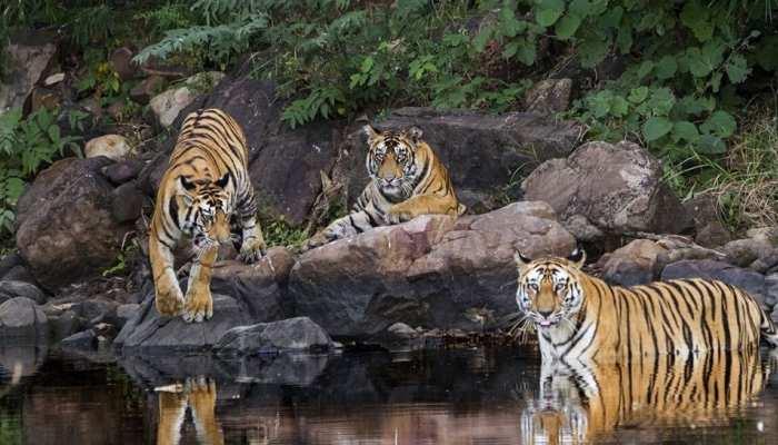 जयपुर: कुंभलगढ़ में बनेगा प्रदेश का चौथा टाइगर रिजर्व, CM गहलोत की मुहर लगनी बाकी