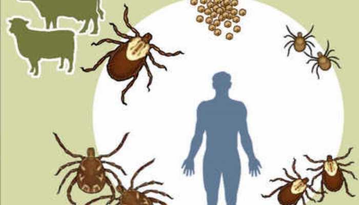 Maharashtra Palghar district on alert over Congo fever