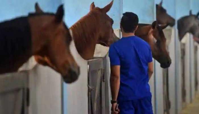 इस देश में घोड़े भी जीते हैं 'लग्जरी लाइफ', रहने के ठाठ जान रह जाएंगे हैरान